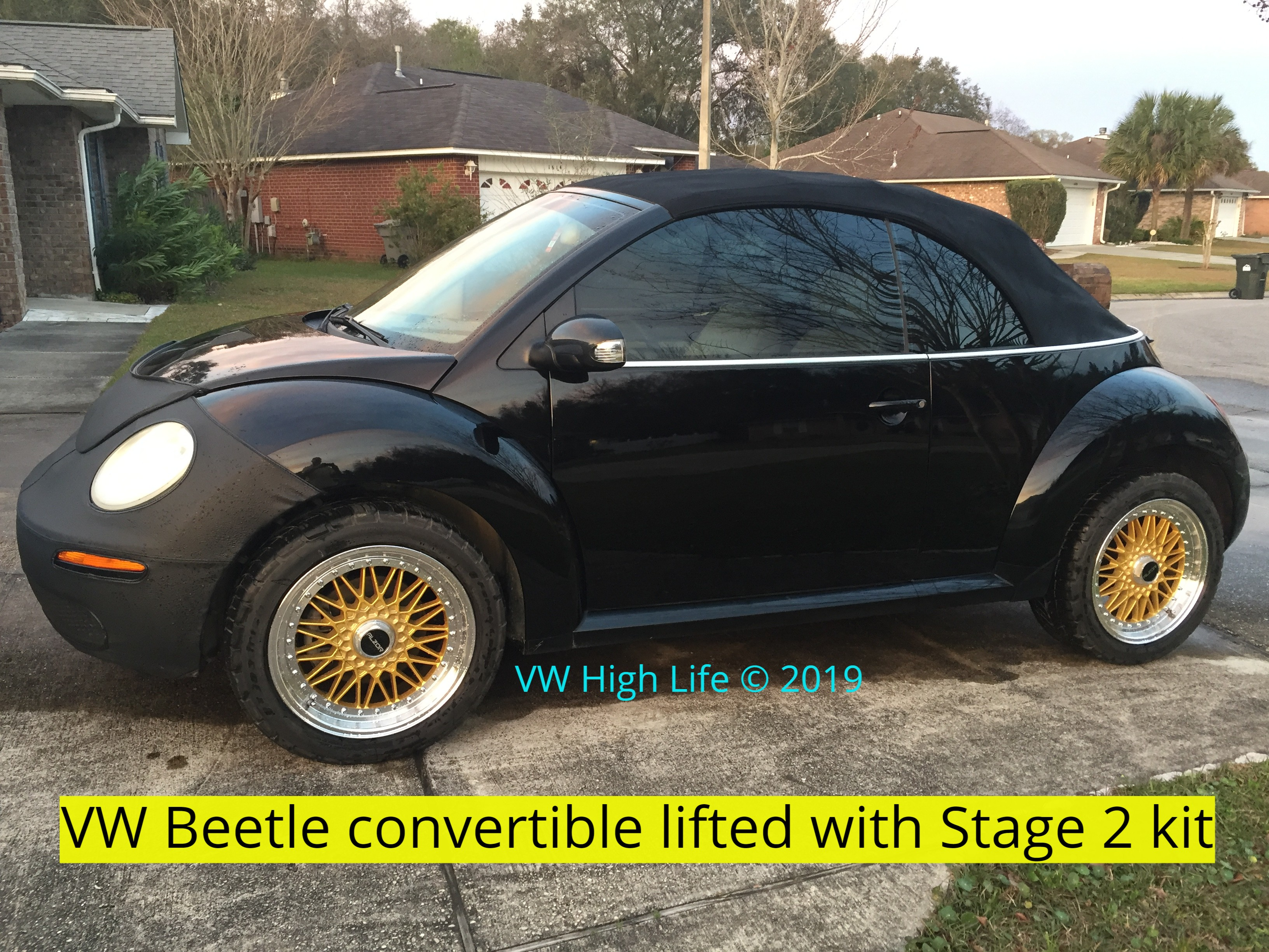 Vincent's Beetle